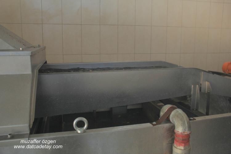 Zeytin yıkama havuzu