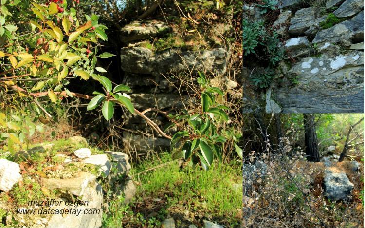 eski ev duvarları