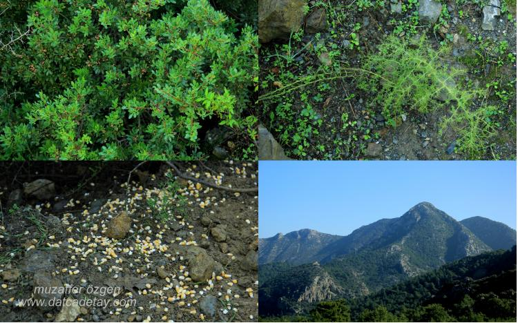 kasım bitkileri