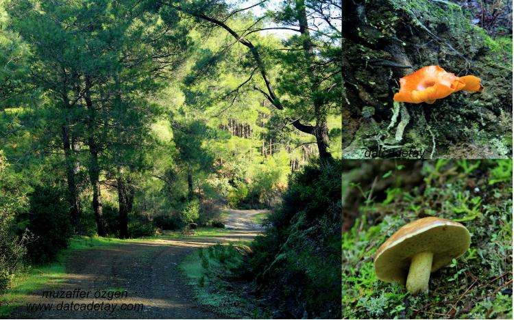 Bubaslık orman yolu