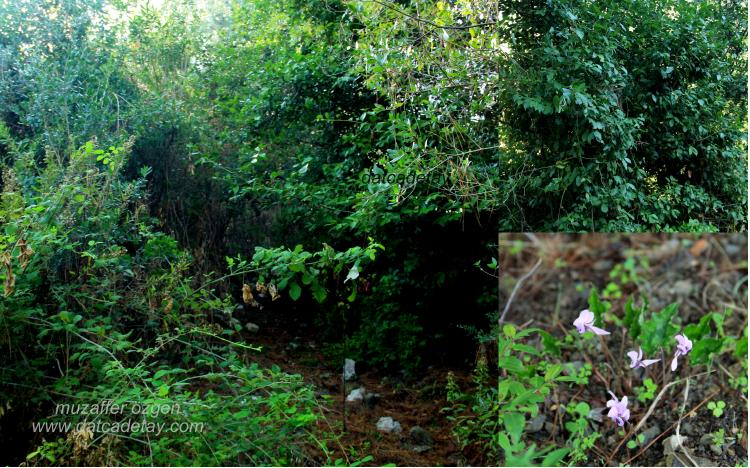 Ormanda patika yollar