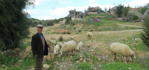 reşadiyeli çoban