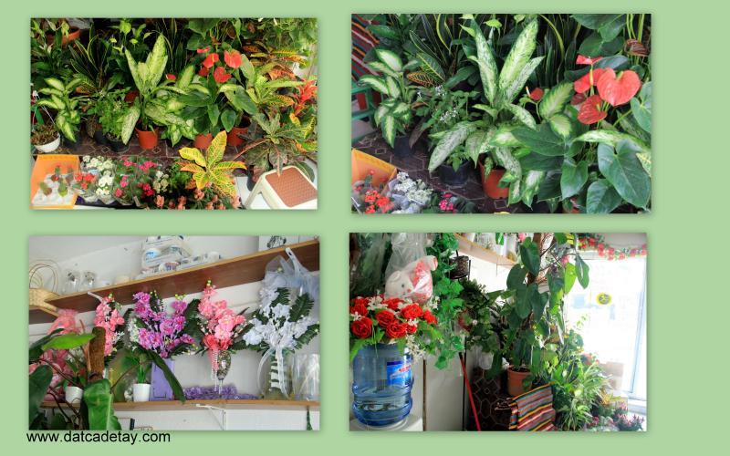 datça çiçek siparişleri