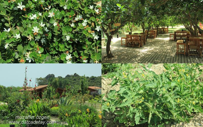 hayıtbükü ahşap evler bahçesi