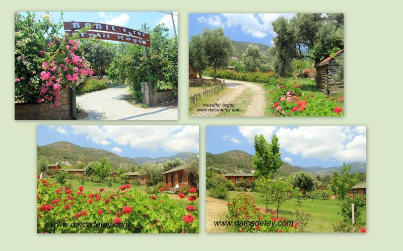 Mesudiye ovabükü babil tatil köyü