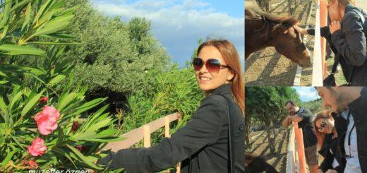 olive farm çiftliğinde fotoğraf çektirmek