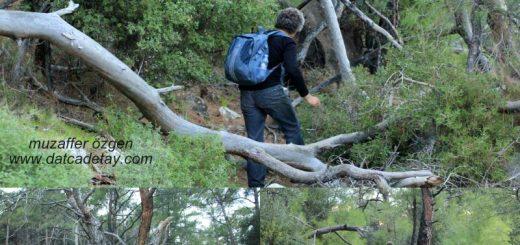 datça ormanlarında trekking