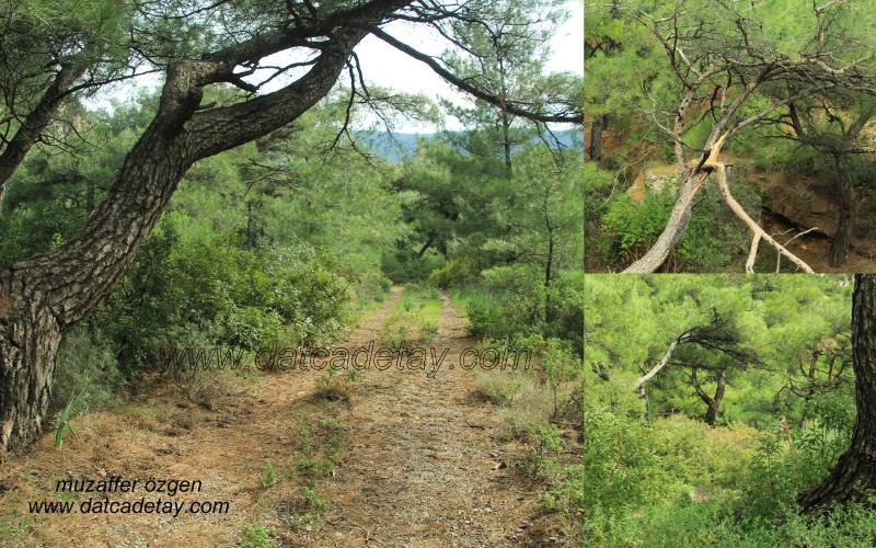 datça doğasında trekking