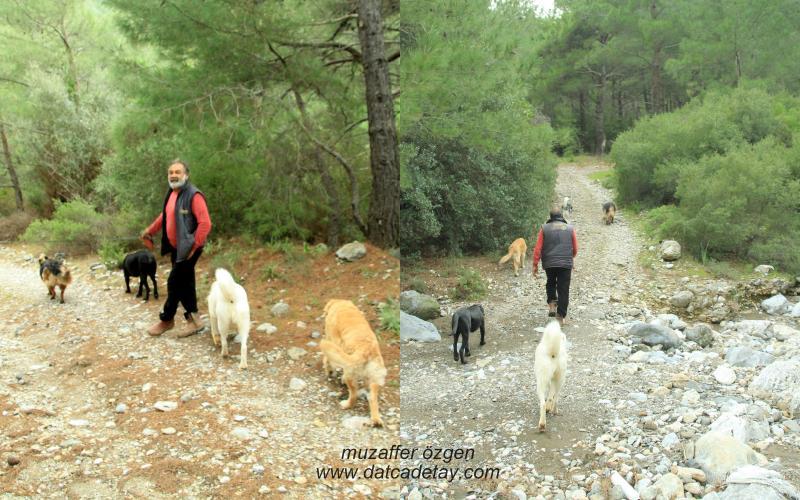 hızırşah kartal vadisi köpek gezintisi