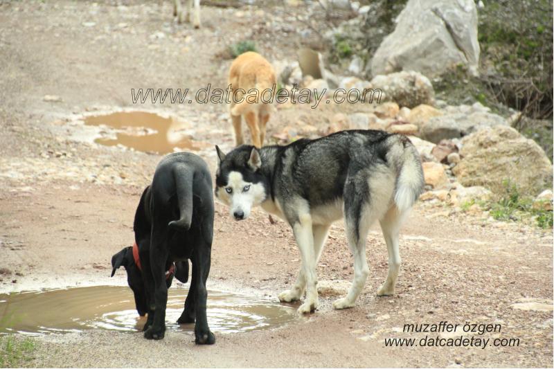kartal vadisinde köpekler