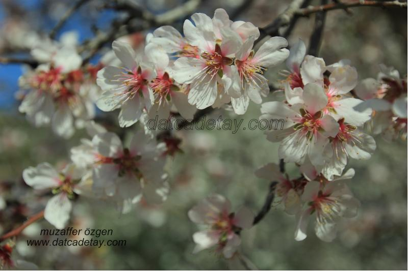 betçe'de bahar