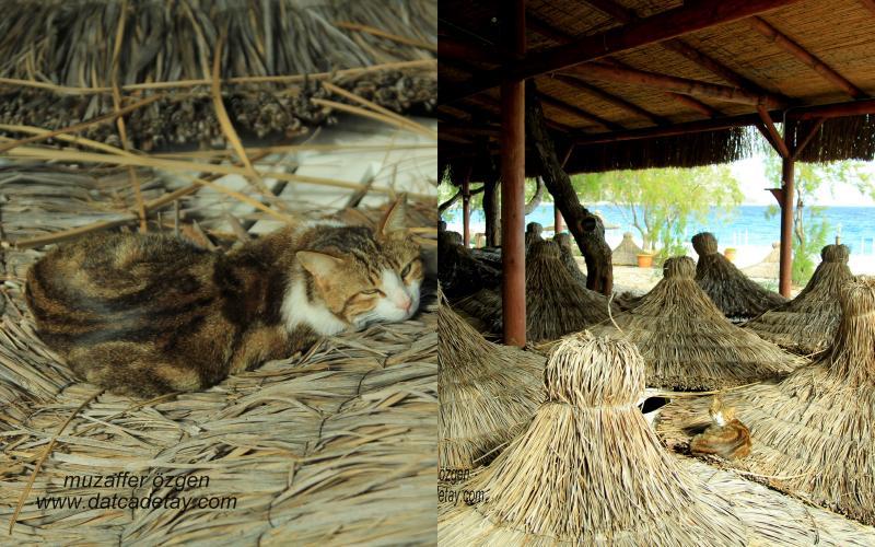 sahilde yatan kedi
