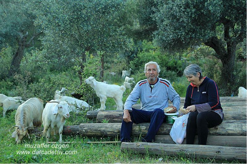 keçi çobanı