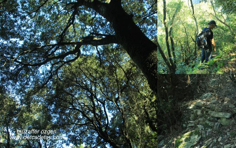 datca-yaban-dogasi-16