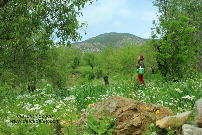 datça yazıköy arazileri