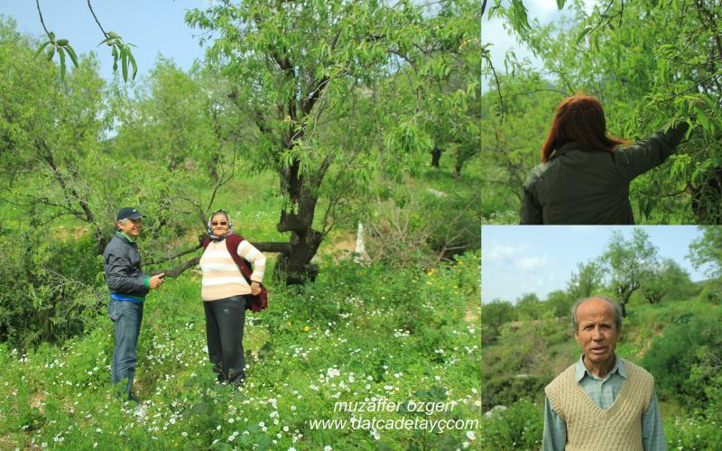 yazıköy bahçeleri