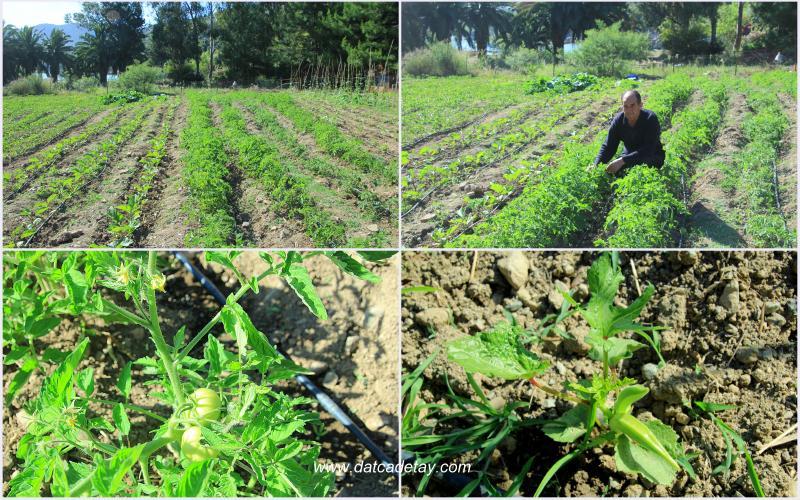 gabaklar tarım arazisi