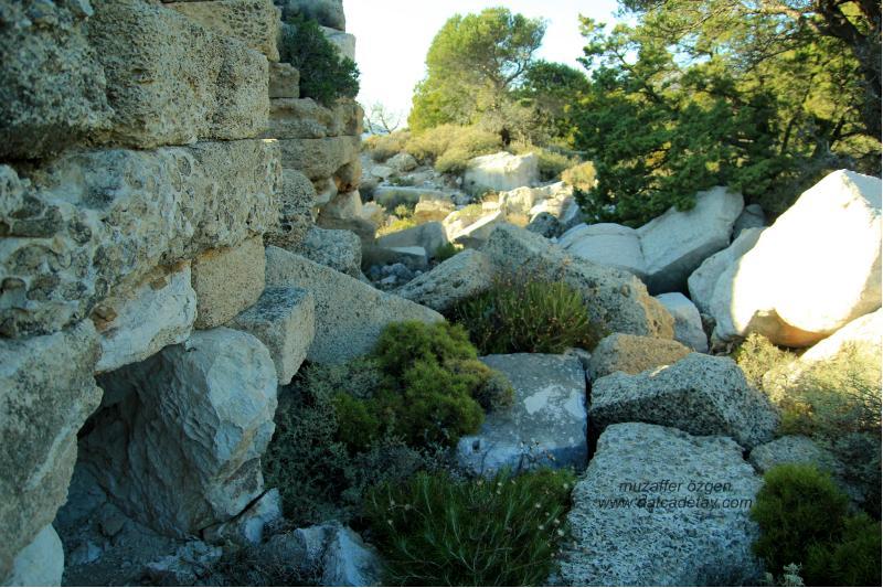 knidos aslanlı mezar