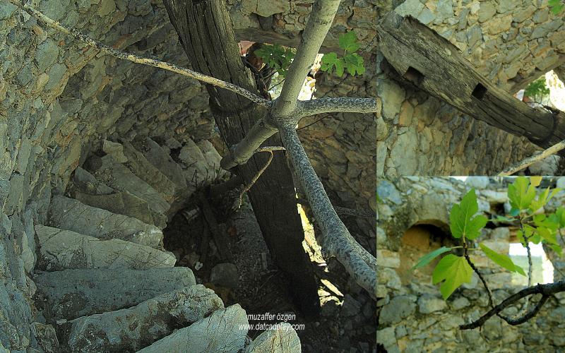 datcada-sonbahar-11