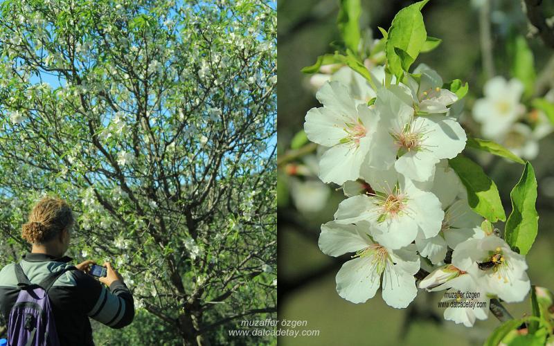 datcada-sonbahar-16