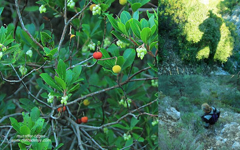 datcada-sonbahar-4
