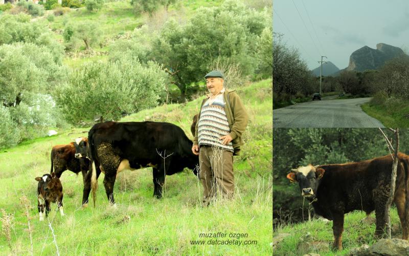 otlayan inekler