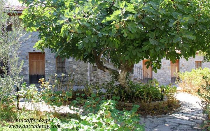 eski datça incirli bahçe