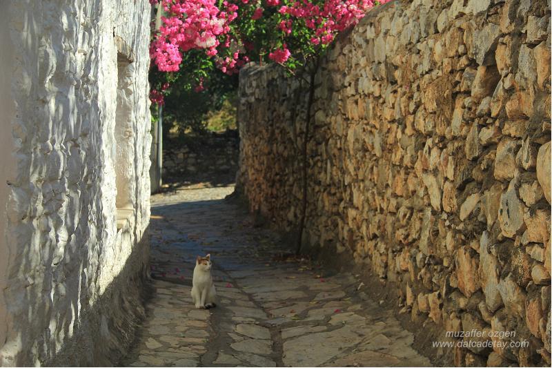 eski datça kedili sokak