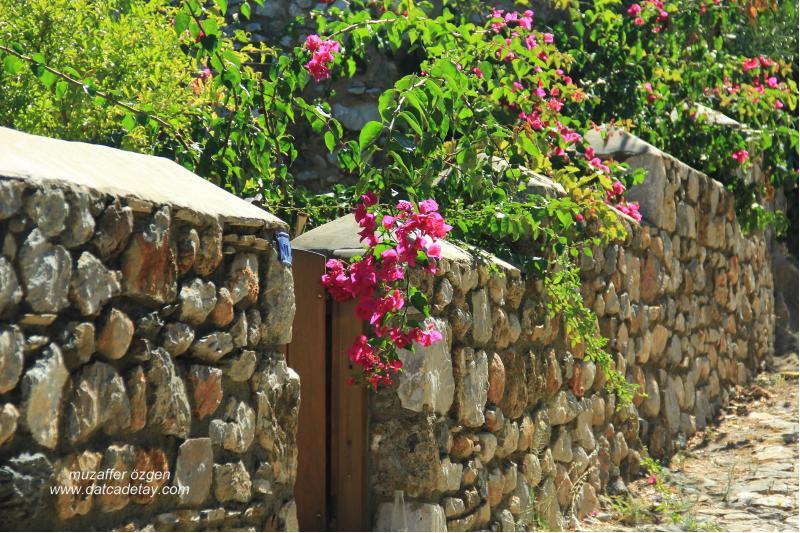 eski datça begonvilli taş duvarlar