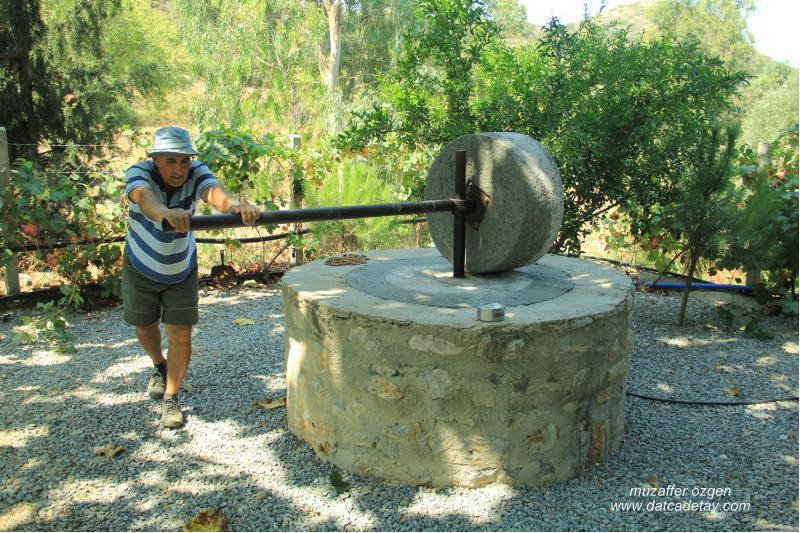 knidia çiftliğinde değirmen taşı