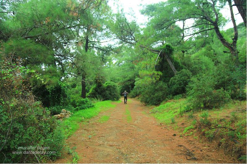 ormanda doğa yürüyüşü