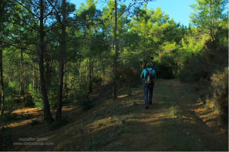 kurucabük ormanlar
