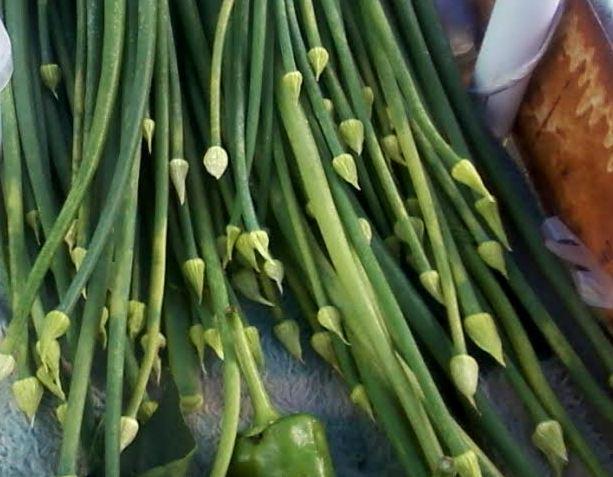 yeşil soğan sibeyi