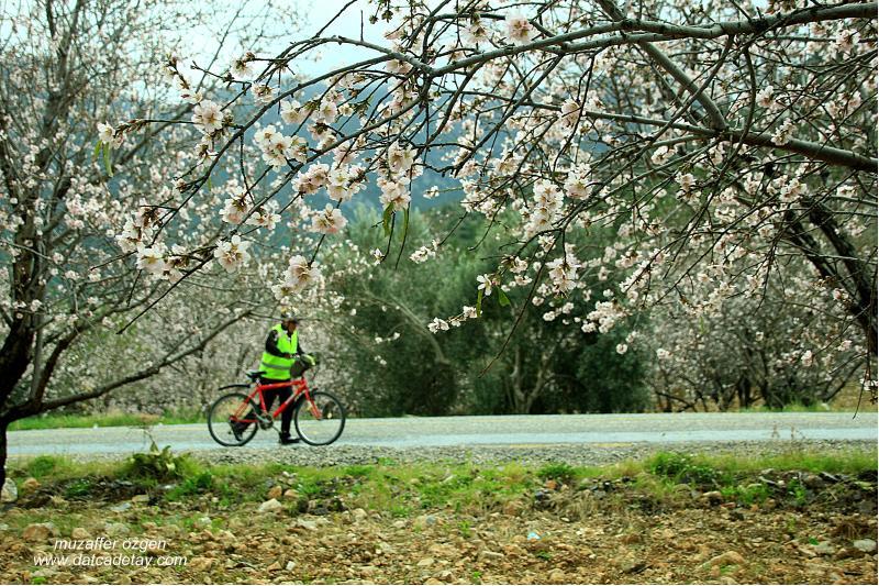 badem çiçekleri ve bisikletçiler