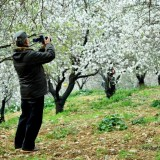 badem çiçeklerini fotoğraflamak