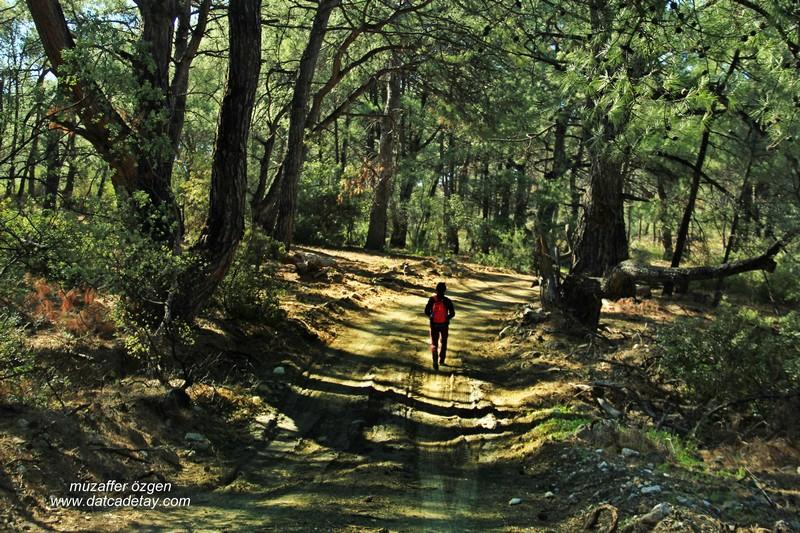 datça ormanlarında yürüyüş