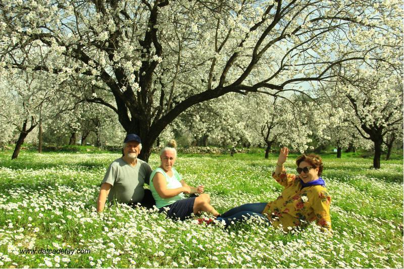 badem çiçekleri ve papatyalar