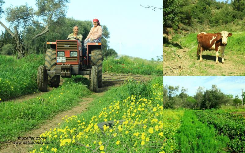 kızlan arazilerinde çiftçiler