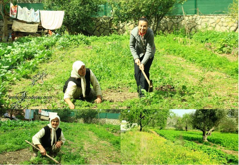 bahçede otlar temizleniyor