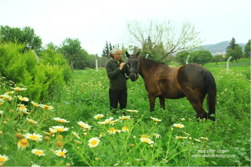 datça'da yeşil doğa