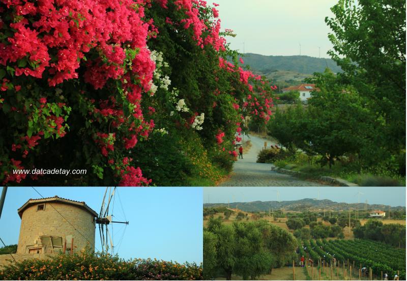 vineyard bahçesi