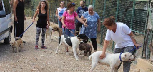 hayvanseverler köpekleri gezdirdi