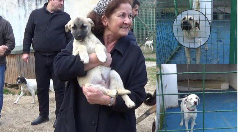 datça hayvan barınağı ziyareti