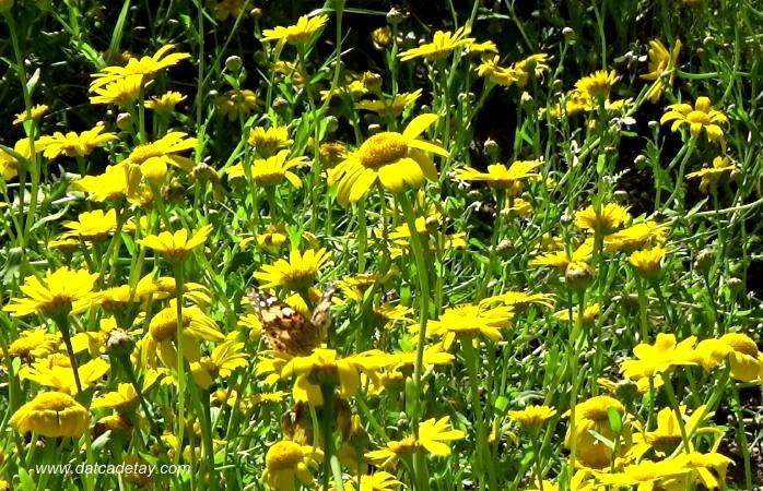 çiçekler içinde kelebekler